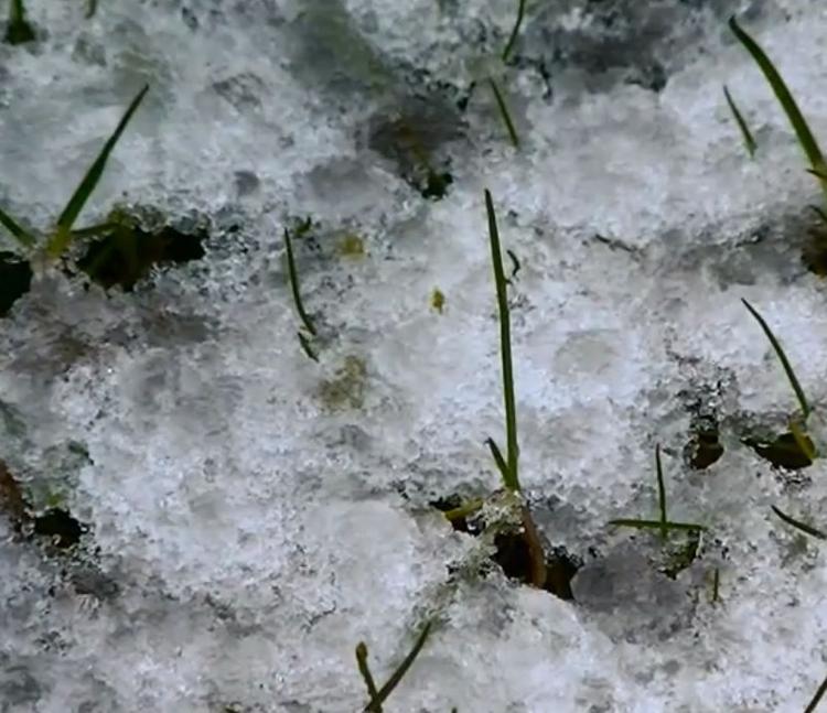 В Петербурге награждена школьница, которая спасла провалившихся под лед детей