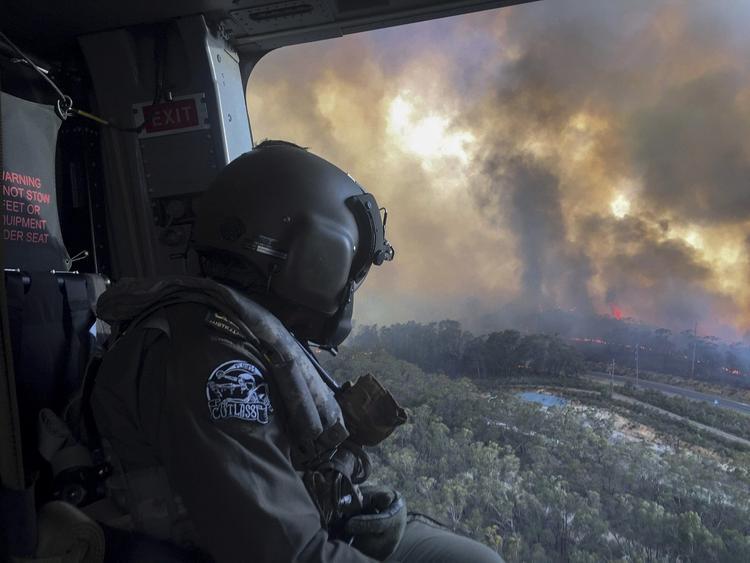 В Австралии уточнили количество погибших от лесных пожаров животных