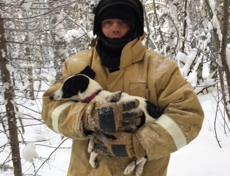 Пожарные полтора километра гнались за собакой, убежавшей из разбившейся в ДТП машины