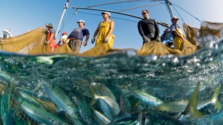 Евросоюз выловил всю рыбу