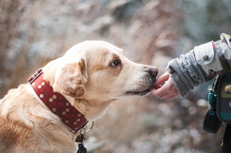В Белгородской области спасатели достали из полыньи упавшую в реку собаку