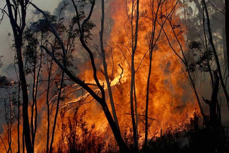 В очаге лесного пожара в Австралии перевернулся автомобиль с добровольцами