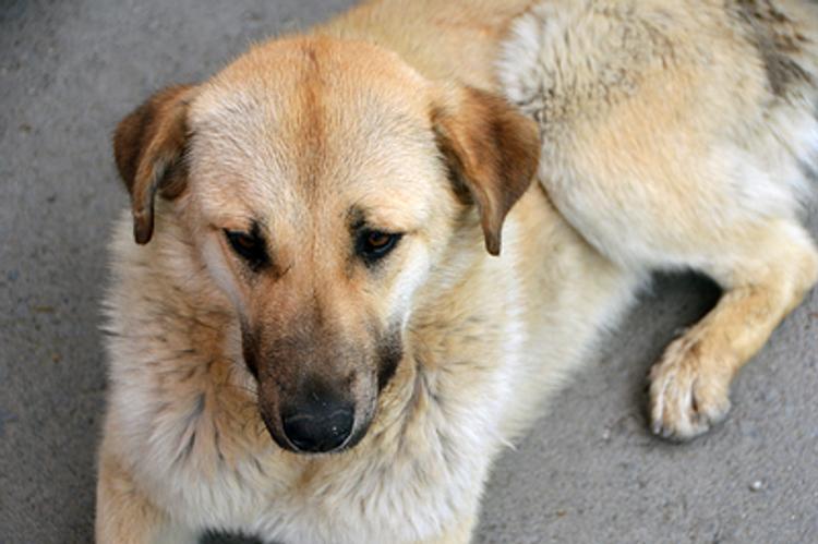 Устанавливается личность мужчины, найденного на улице в Москве мертвым  со следами укусов собак