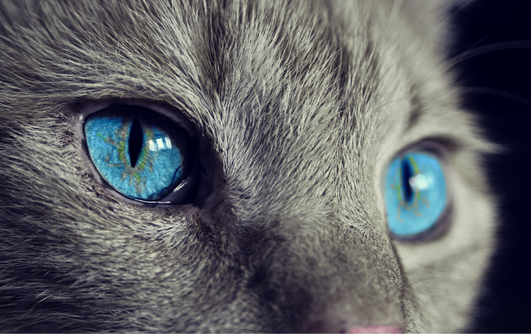 В КНР наряжают кошек в медицинские маски для защиты от коронавируса