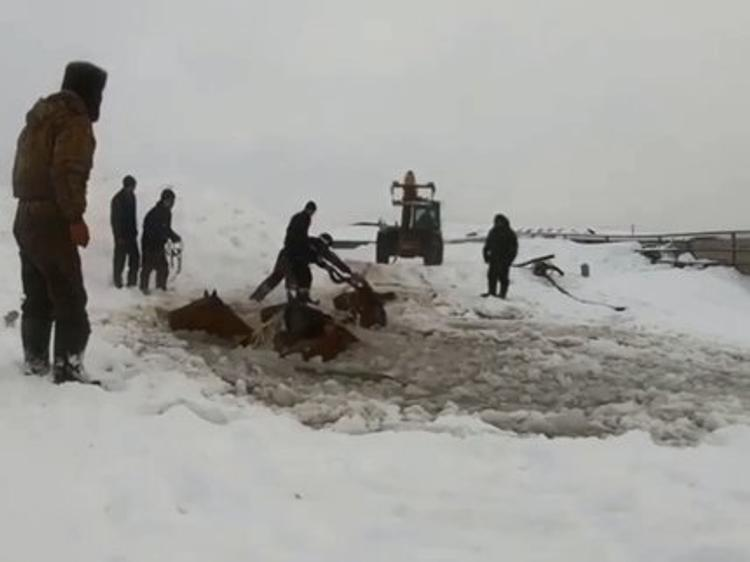 В Иглинском районе Башкирии 11 лошадей провалились под лед