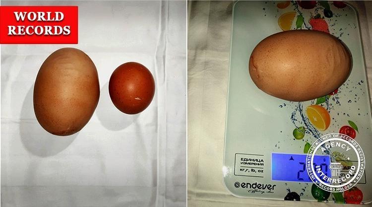 В деревне Запрудная под Калугой курица снесла гигантское яйцо и установила мировой рекорд