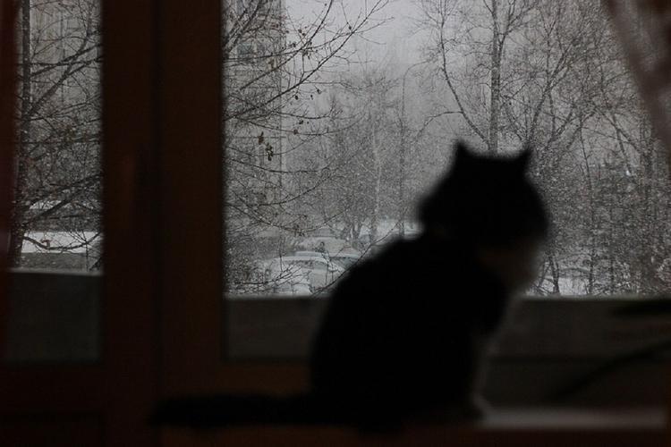 Синоптики: похолодание и снег придут в Москву на следующей неделе