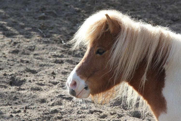 Молодой калининградец на пони помог поймать серийного грабителя