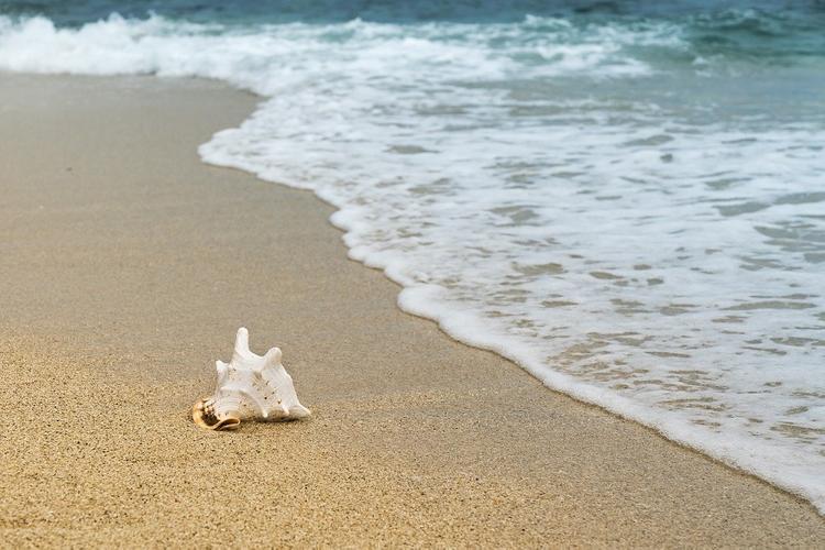 На пляже в Австралии нашли странное существо -