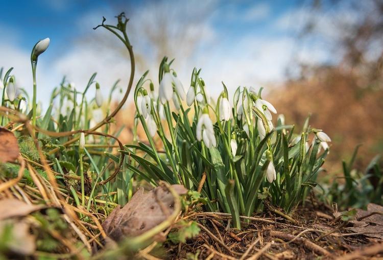 Синоптик предупредил об аномально теплом начале весны