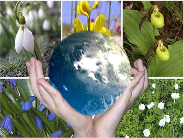 Что-то «не так» с экологией или с нами