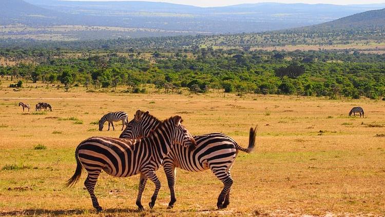 Русские туристы из Кении просят о помощи