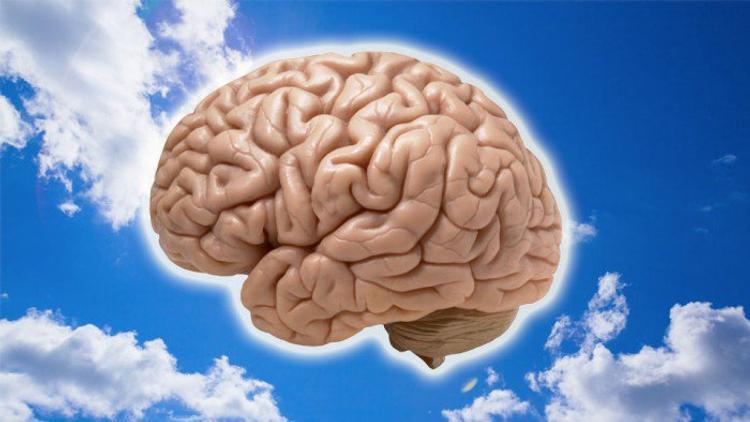 Сидячий образ жизни и комфорт убивают мозг