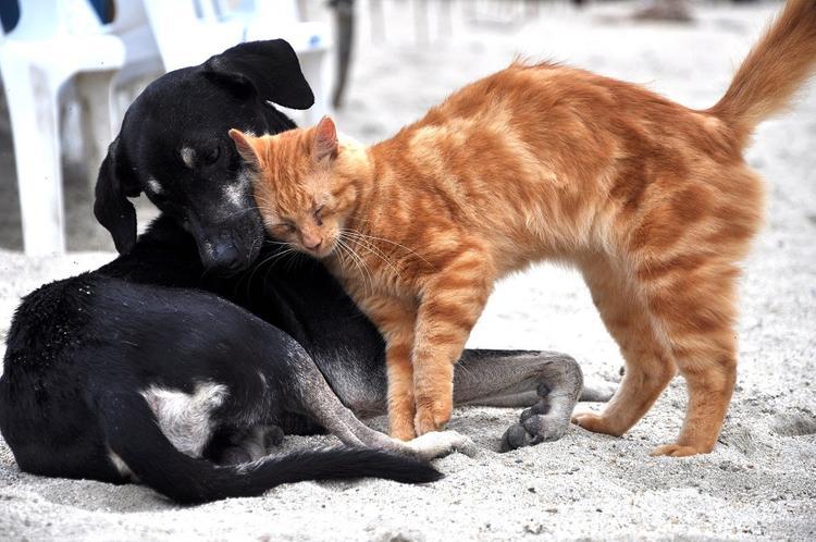 Шэньчжэнь стал первым китайским городом, запретившим есть кошек и собак