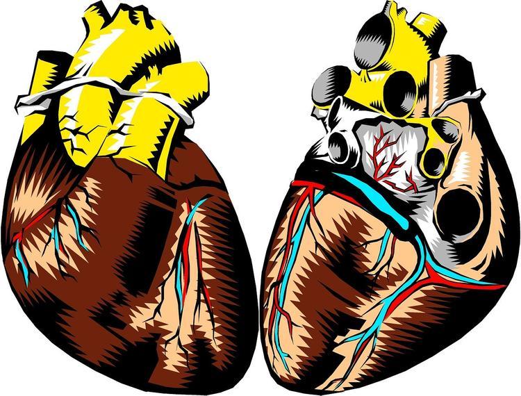 Кардиологи выяснили, почему сильный пол больше подвержен сердечным заболеваниям