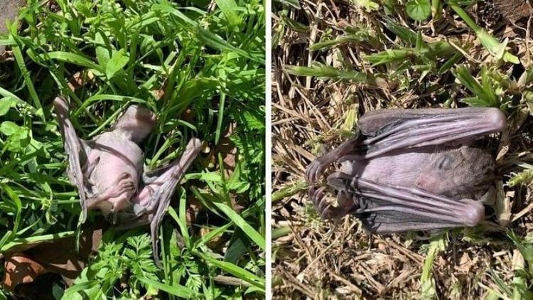 Падающие с неба летучие мыши вызвали беспокойство у жителей Израиля