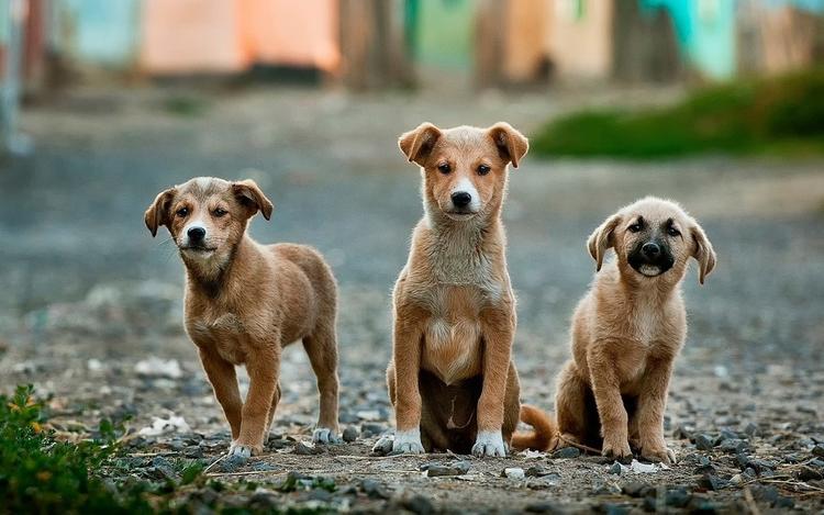 В Китае перестанут есть собак
