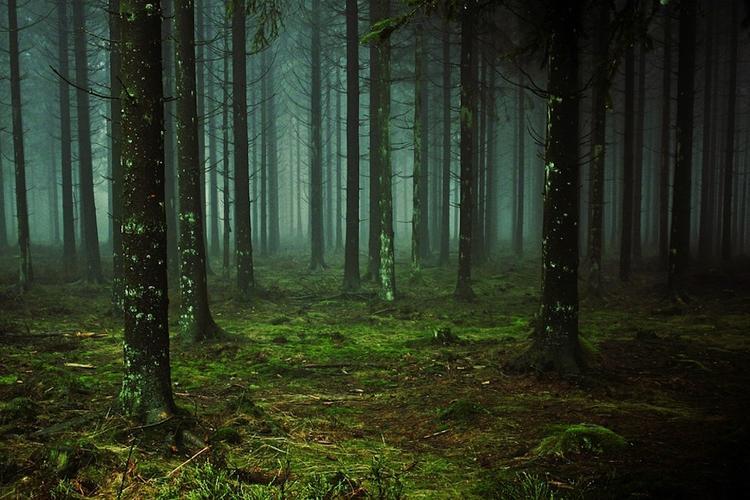 Пропавших несколько дней назад в Крыму подростков нашли живыми в лесу