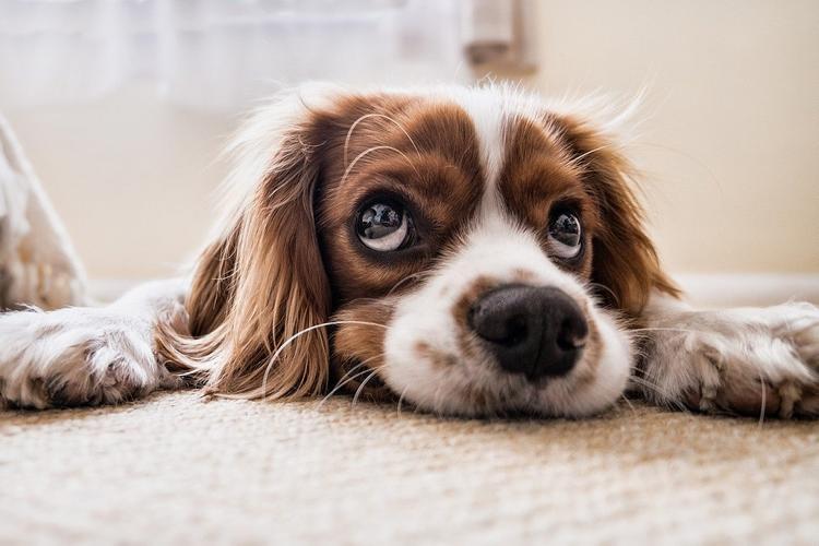 В России предложили штрафовать за лающих ночью собак