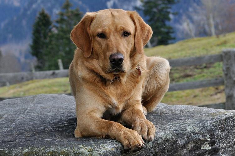 В посёлке Некрасовский собаку вытащили из колодца