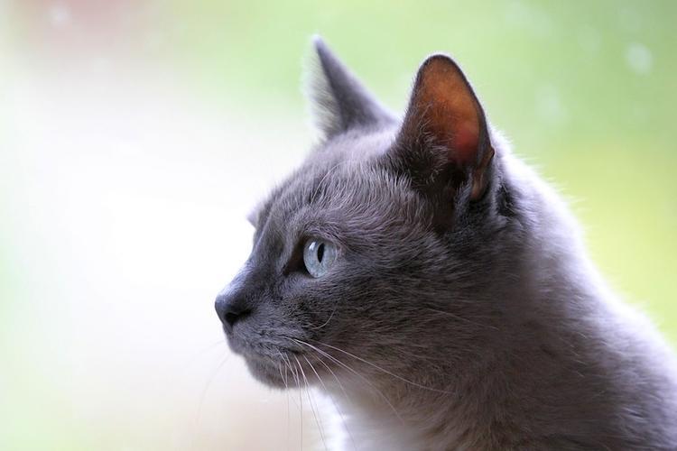 У кошек впервые выявили бессимптомное течение COVID-19