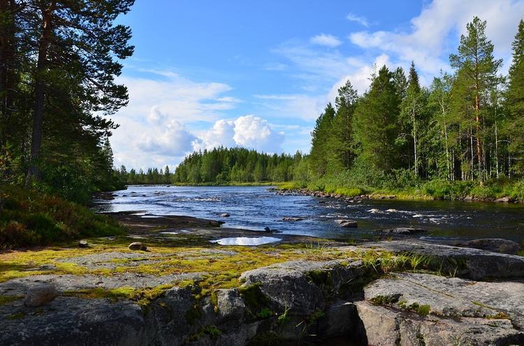 Эколог не согласился с тем, что пандемия пошла природе на пользу