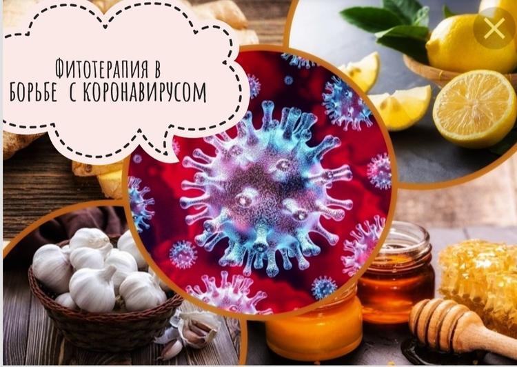 Фитотерапия: как не заразиться коронавирусом