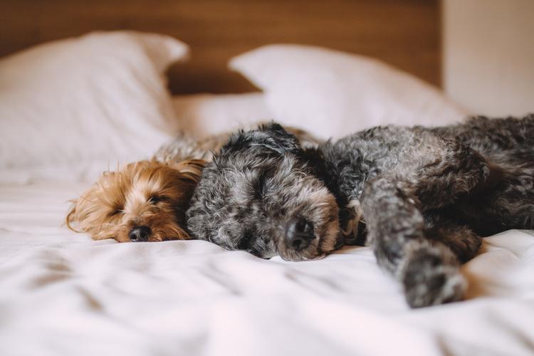 Ветеринар: какими продуктами нельзя кормить собак