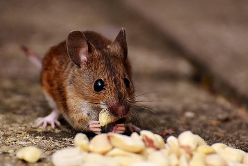 На Украине исчезновение 2700 вагонов зерна списали на мышей