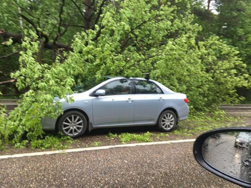 В Москве ветер повалил больше 30 деревьев