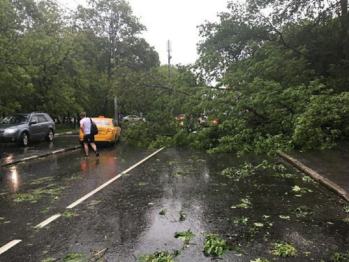 Ветер повалил шесть деревьев во время грозы в Москве