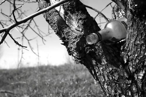 Скандал в Росгвардии: ефрейтор повредил сержанту анальное отверстие бутылкой из-под выпитой водки