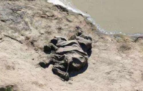 В Африке начали массово умирать слоны