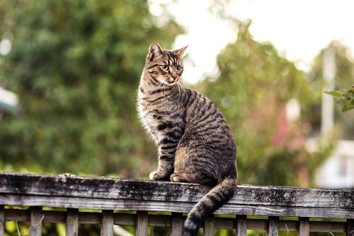 Госдума предлагает внести в новый КоАП ответственность за нарушения при обращении с животными