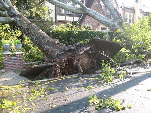 Во время бури в США дерево упало на гараж, 19 пострадавших