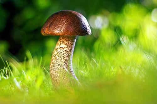 Эксперт предупредил об опасности сбора червивых грибов