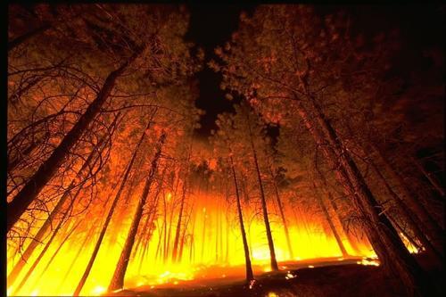 Площадь лесных пожаров в ХМАО за минувшие выходные удвоилась