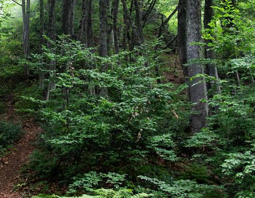 В подмосковном лесу около Домодедово грибники нашли останки неизвестного человека