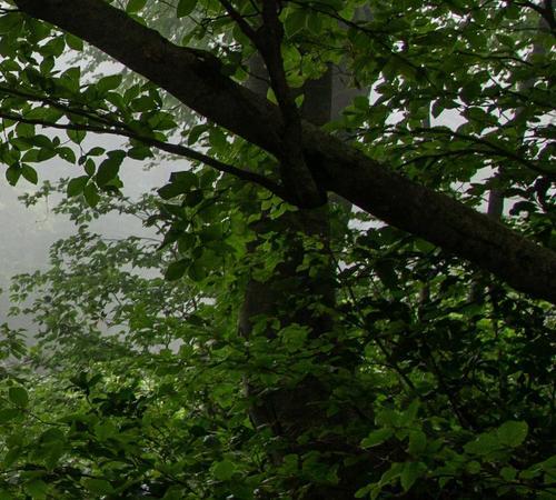 В лесу недалеко от Сергиева Посада грибники нашли тело женщины
