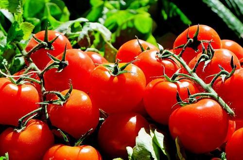 Томатная паста оказалась полезнее томатов