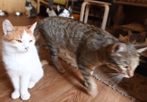 В сети обсуждают видео, как на Кубани кошки переводят через дорогу собаку с больными лапами
