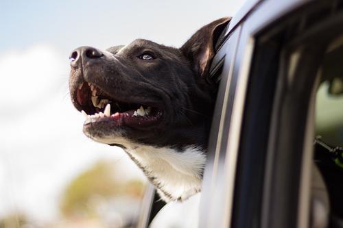 Кинолог заявил, что за агрессию собак нужно уголовно наказывать хозяев