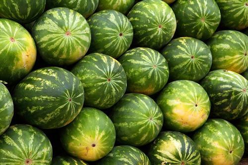 В Астрахани вывели новый сорт арбузов, которые можно есть диабетикам и аллергикам