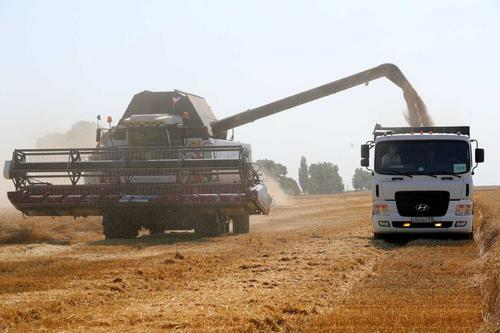 В Ростовской области собрали самый большой урожай зерна в России