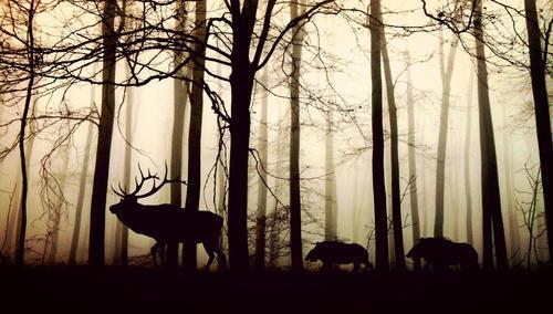 С 1 мая в лесах Иркутской области заблудились 12 человек