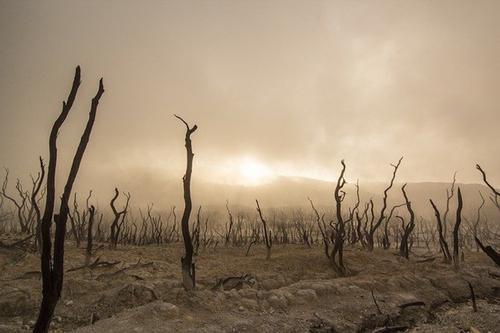 Эколог прокомментировал высказывание Билла Гейтса о «катастрофе страшнее COVID-19»