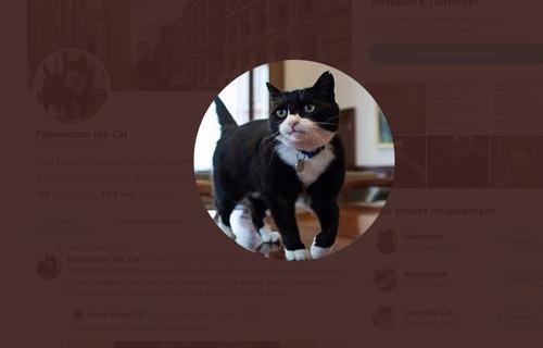 В Британии кот-дипломат ушел на пенсию