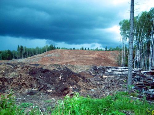 Отшумел русский лес?
