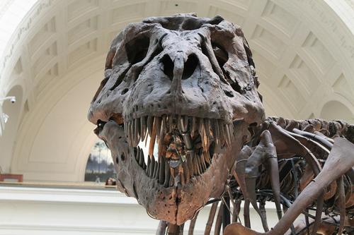 Открыт новый вид динозавра