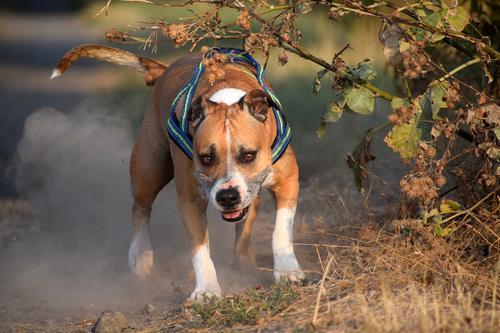В Нижегородской области собака взяла в заложники хозяев